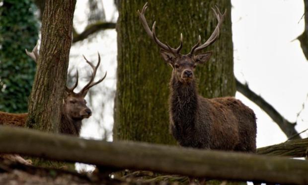 Annulation de la dérogation accordée aux chasseurs pendant le confinement