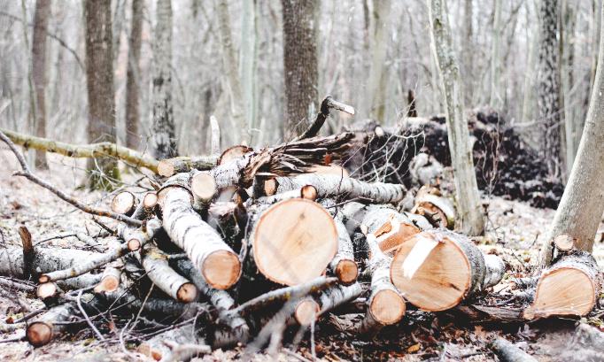 Pour l'augmentation du nombre d'arbres !