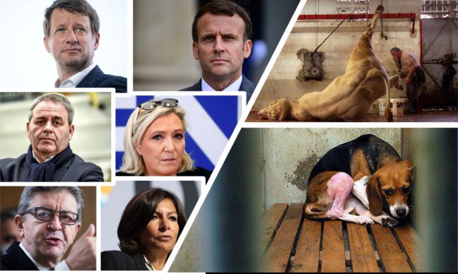 Elections présidentielles : une place pour le bien-être animal !