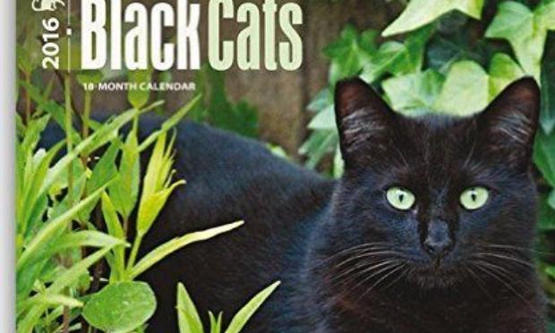 Les chats noirs ont le droit d'être aimés