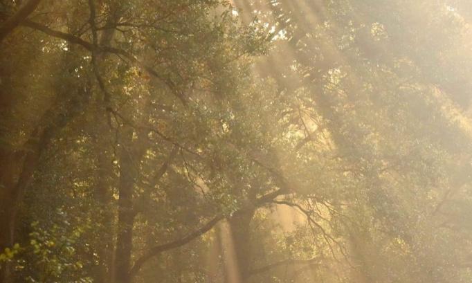 Stop à la chasse durant les congés de Noël et réouverture de la forêt de Mormal aux seuls randonneurs