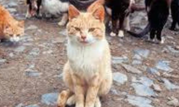 Pétition : Les chats errants doivent être identifiés et stérilisés