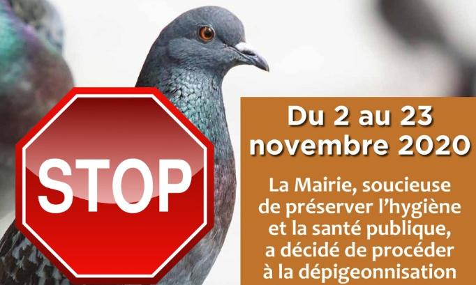 Pétition : NON au MASSACRE de Pigeons à Asnieres sur Seine (92600)