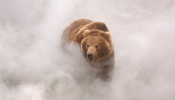 NON aux montreurs d'ours - Terre des Ours : Aves France dit stop ! Petition-img-11531