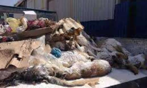stop galoufa en algerie / اوقفو القالوفة في الجزائر  / نطالب_بتفعيل_قانون_حماية_الحيوانات