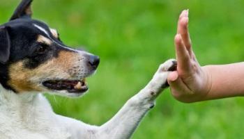 Pétition : Pour une éducation canine obligatoire pour tous les chiens !