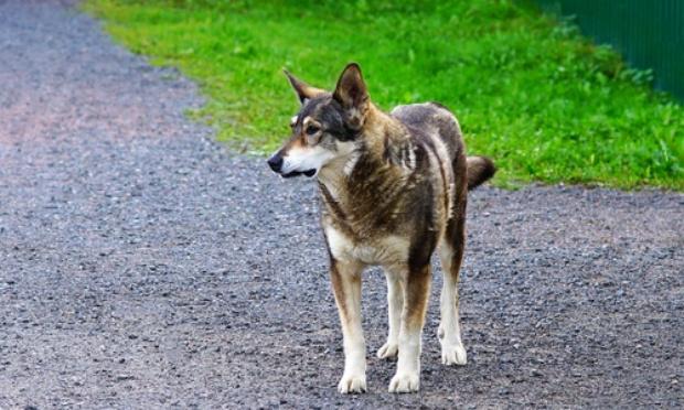"Non au massacre des chiens errants/""Toplan Animal Center""is now ""Toplan Kill Center""."