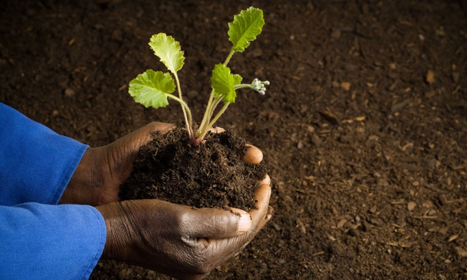 Pour une terre fertile, préservez les lombrics !