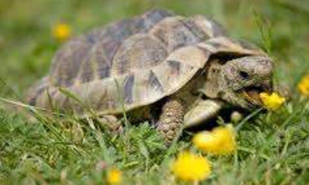 Nommer les tortues tortouze