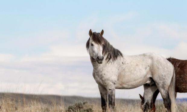 Pétition : Mettre fin à l'hécatombe des chevaux quaddedus qui meurent de faim et de soif en été et ceci dans l'indifférence générale !