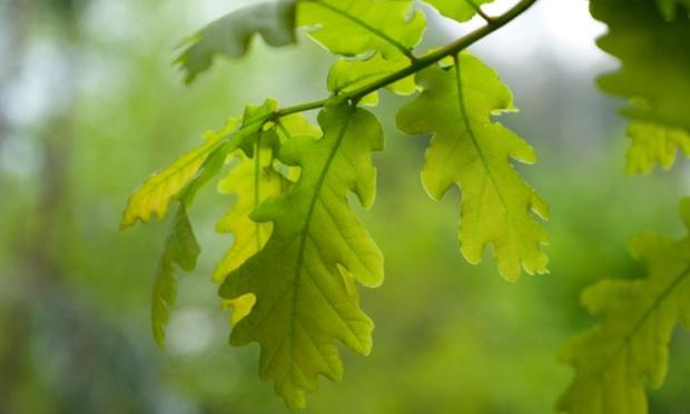 Sauvez un espace vert et son chêne centenaire du quartier petit bois à Toulon !