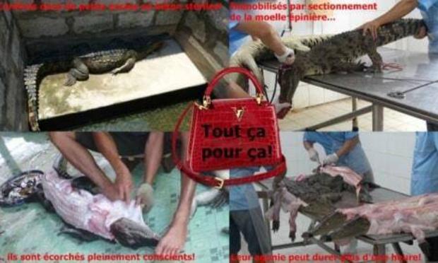 Pétition : LVMH : Stop au saccage du vivant !