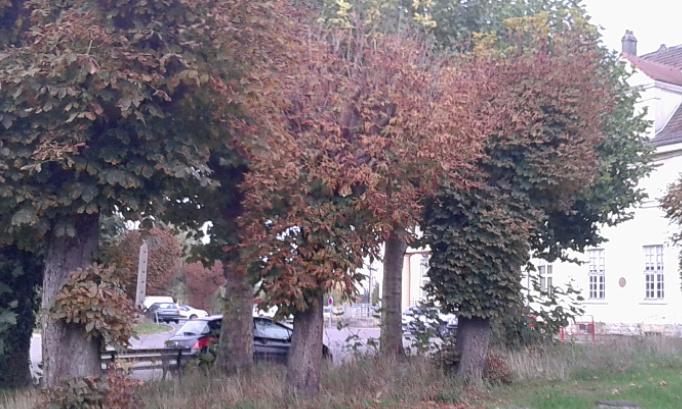 Non à la destruction des arbres centenaires de la place de la gare à Novéant-sur-Moselle