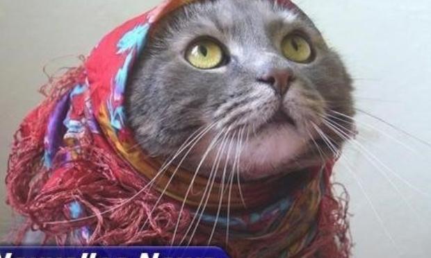 Ensemble pour l'émancipation des chats