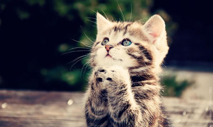 Mon chat 'Diego' était l'être le plus doux au monde. Je demande sa canonisation auprès du clergé.