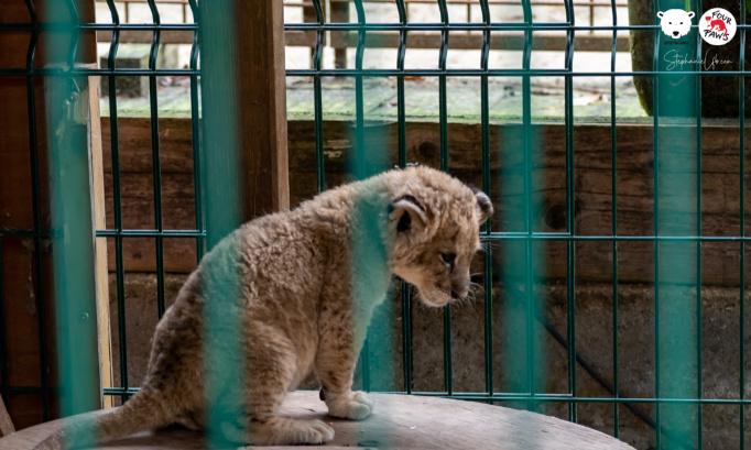 Pétition : Fermeture des faux-sanctuaires pour animaux sauvages en France