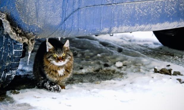 Pour qu'un grand tipi chat ou cabane pour chat soit mis en place à Noisy-le-Sec pour les chats errants