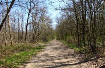 Pétition : Pour une enquête sur l'abandon mortel d'un chien en forêt de Bouconne