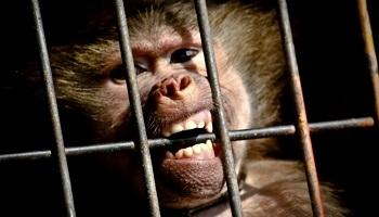 Pétition : Pour l'arrêt des cirques avec animaux sauvages à Dunkerque !