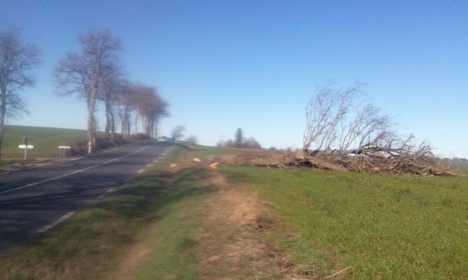 Replanter les arbres d'alignement abattus au titre de l'Article L350-3 du Code de l'environnement