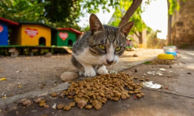 Enquêter sur la disparition des chats abandonnés, perdus, errants de la ville, et le gazage des pigeons !