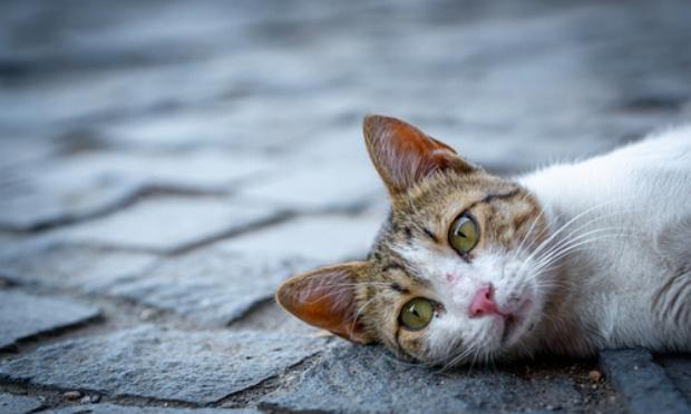 Enquêter sur la disparition des chats errants de la ville, et le gazage des pigeons.