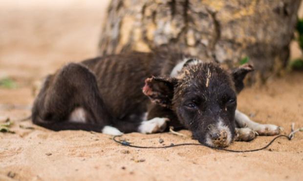 SOS animaux en détresse ! Pour des textes de lois garantissant les droits des animaux au Maroc !