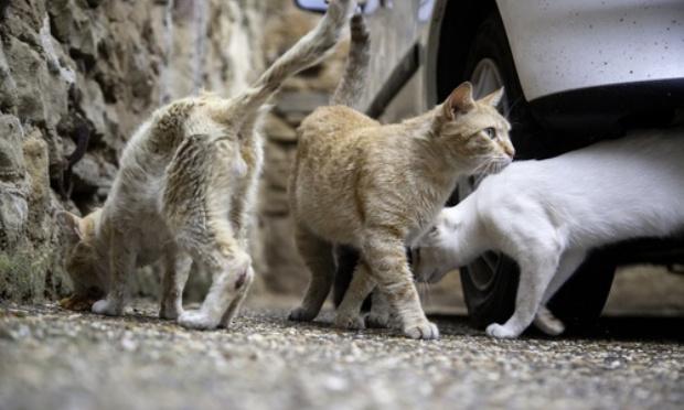 Tuerie de chats par des chasseurs sur Quiberon