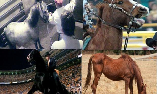 Pétition : #yoursadfriend : Non à la maltraitance des chevaux de courses !