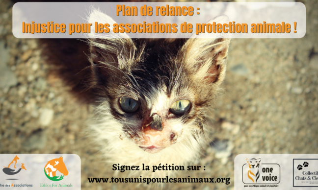 Pétition : Protection Animale : tous solidaires !