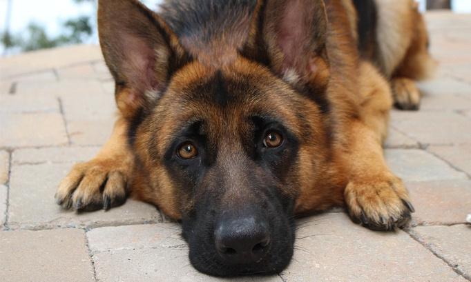 Prison ferme et interdiction définitive de détenir des animaux contre la femme ayant traîné son chien derrière un véhicule à Renaison le 10/12/2020