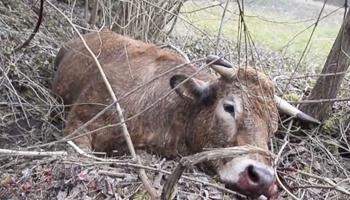 Pétition : Vache tuée de 70 balles, soutien aux associations