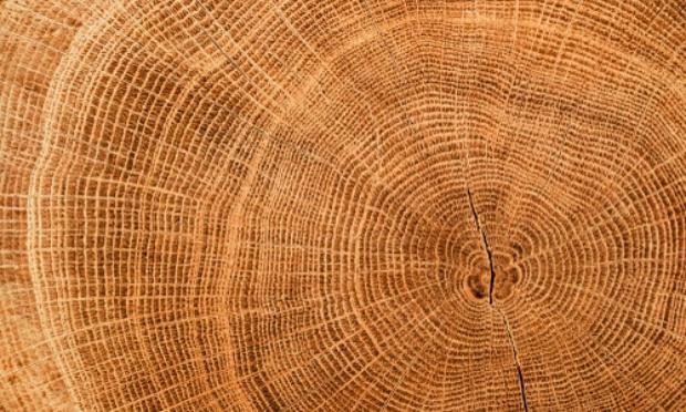 Non à l'abattage des arbres lundi 21 Décembre à Meaux aux 122 et 126 Rue Jean Jaurès