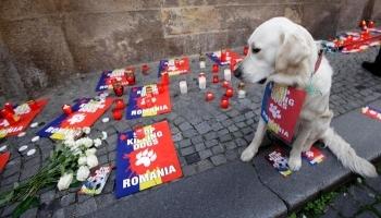 Pétition : Stop aux massacres des chiens dans les pays de l'Est