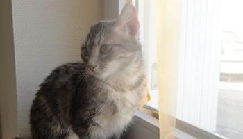 Pétition : Pour Youna et les autres chats, stop à la maltraitance envers les animaux à Lorris !