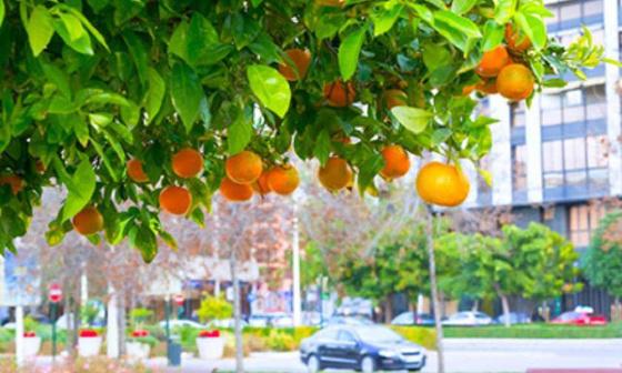Utiliser le plan Canopée et notre argent collectif, pour planter des arbres fruitiers à Strasbourg plutôt que des feuillus