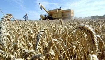 Pétition : Non au blé OGM australien !