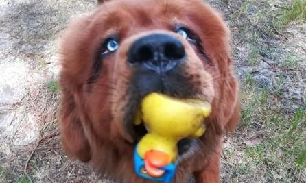 Sauvez mon chien Léo de l'euthanasie
