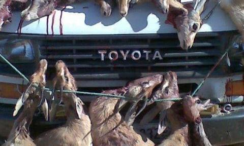Pétition : Braconnage des espèces protégées