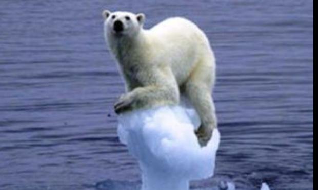 Protégeons notre environnement et celui des animaux
