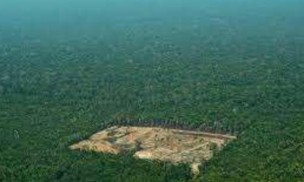 contre la déforestation