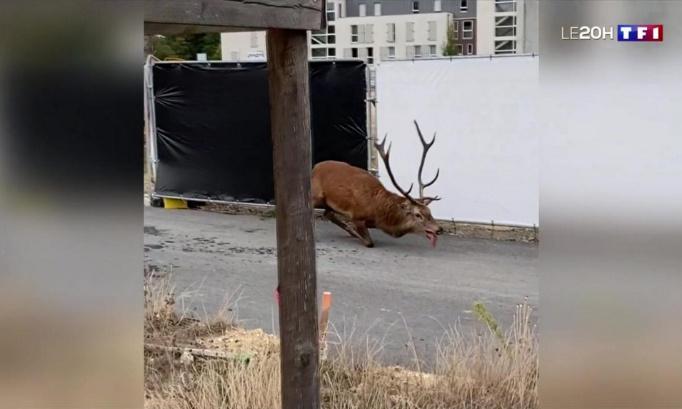 abolir la chasse a cour en france qui engendre la souffrance à l'animal pour le plaisir de l'homme