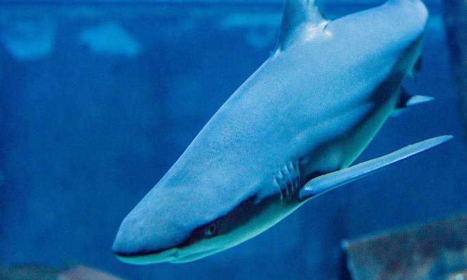 Pour que l'aquarium de la MDPH de Marseille soit déconstruit