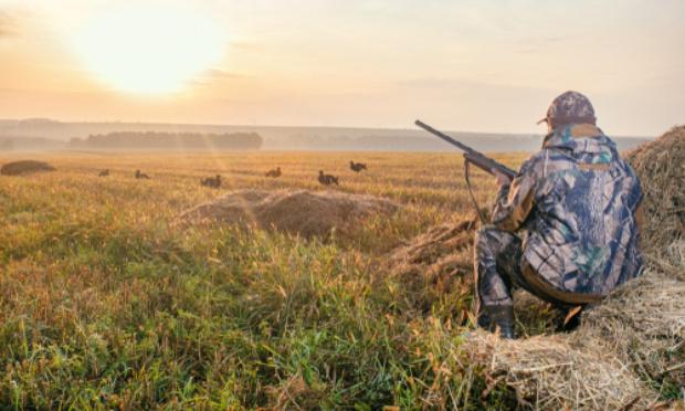 Stop à l'inondation des sondages nuisibles à la chasse traditionnelle