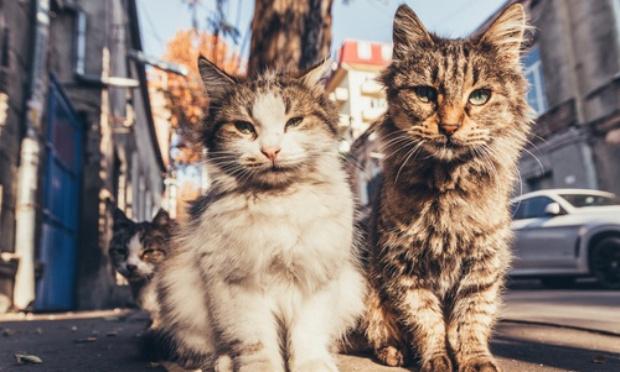 Stérilisation des chats libres de Marseille, l'urgence de la situation !
