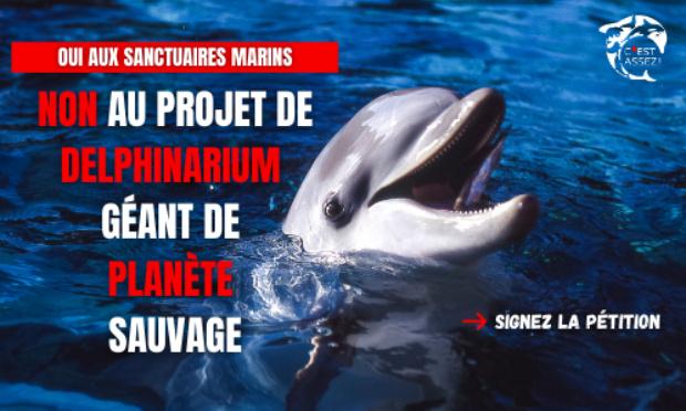 Pétition : Oui aux sanctuaires marins, non au projet de delphinarium géant de planète sauvage !