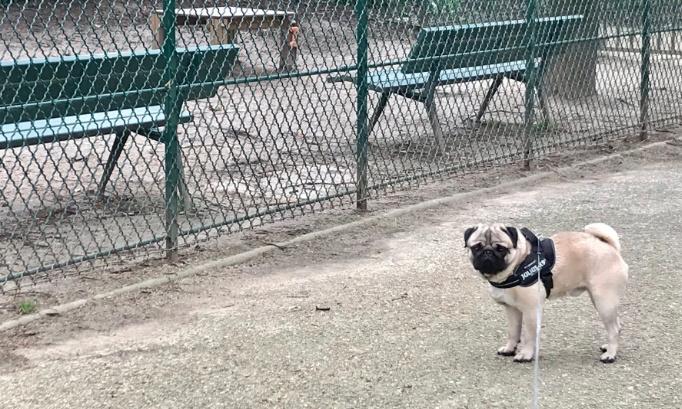 Votons pour la réouverture du Parc Canin Saint Éloi