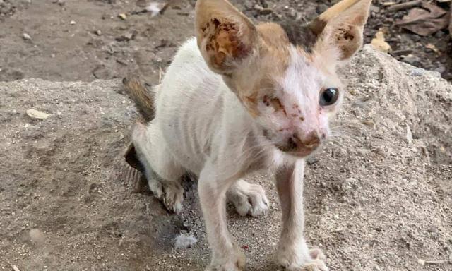 Arrêtez d'abandonner et laisser mourir de soif et de faim les chats (chiens) de Dubaï dans le désert // Stopp dem Aussetzen in der Wüste und dem vor Durst und Hunger sterbenden Katzen und Hunden