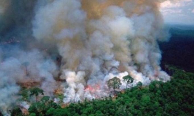 Pétition : Stop aux importations de produits issus de l'exploitation de la forêt amazonienne !