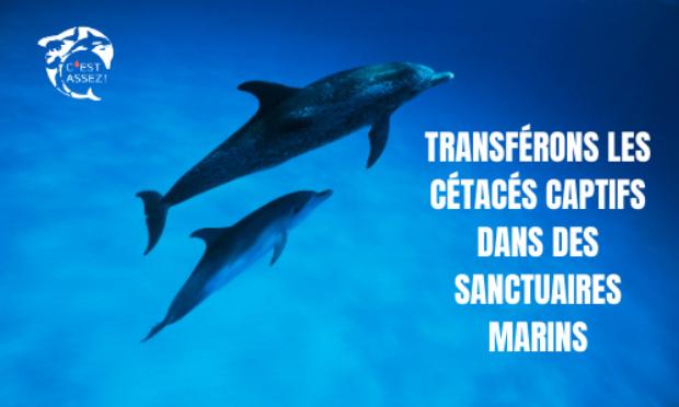 Pétition : MADAME LA MINISTRE, INTERDISEZ LES TRANSFERTS DE CÉTACÉS CAPTIFS VERS D'AUTRES PRISONS MARINES !